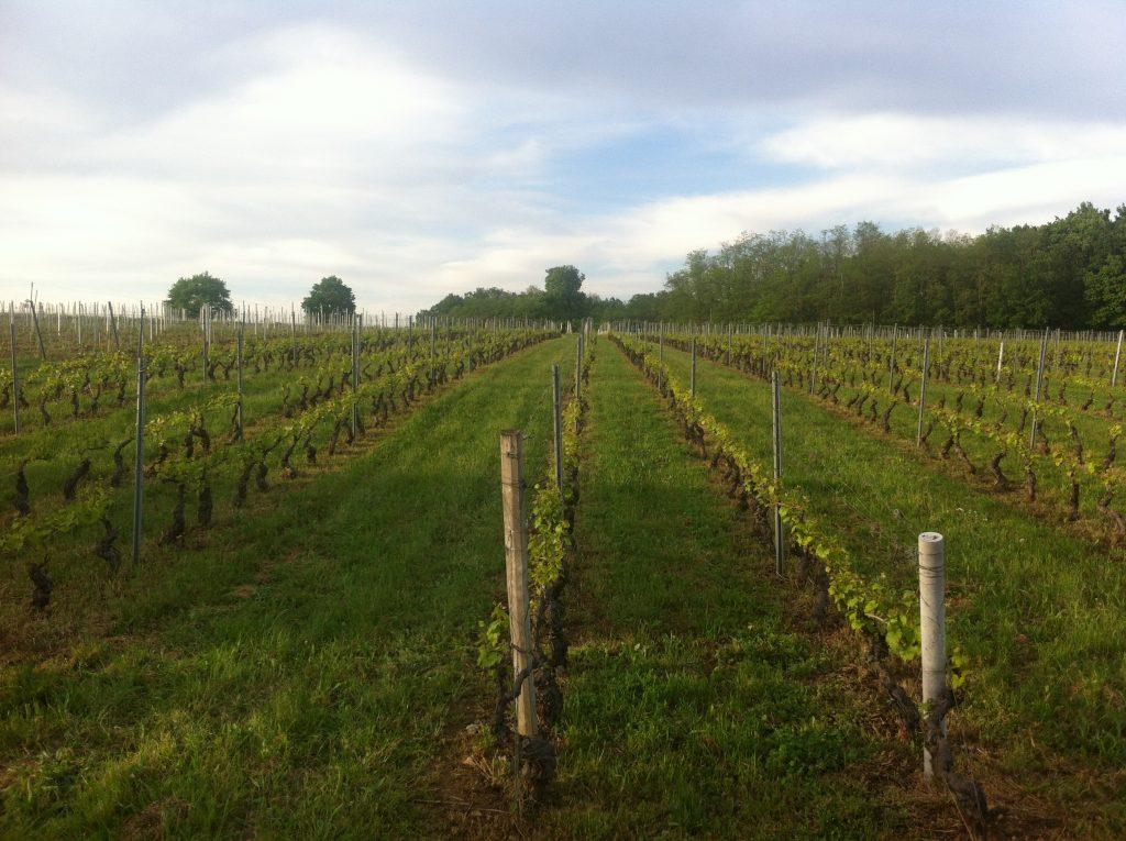 Camperreis Frankrijk: Nuelles