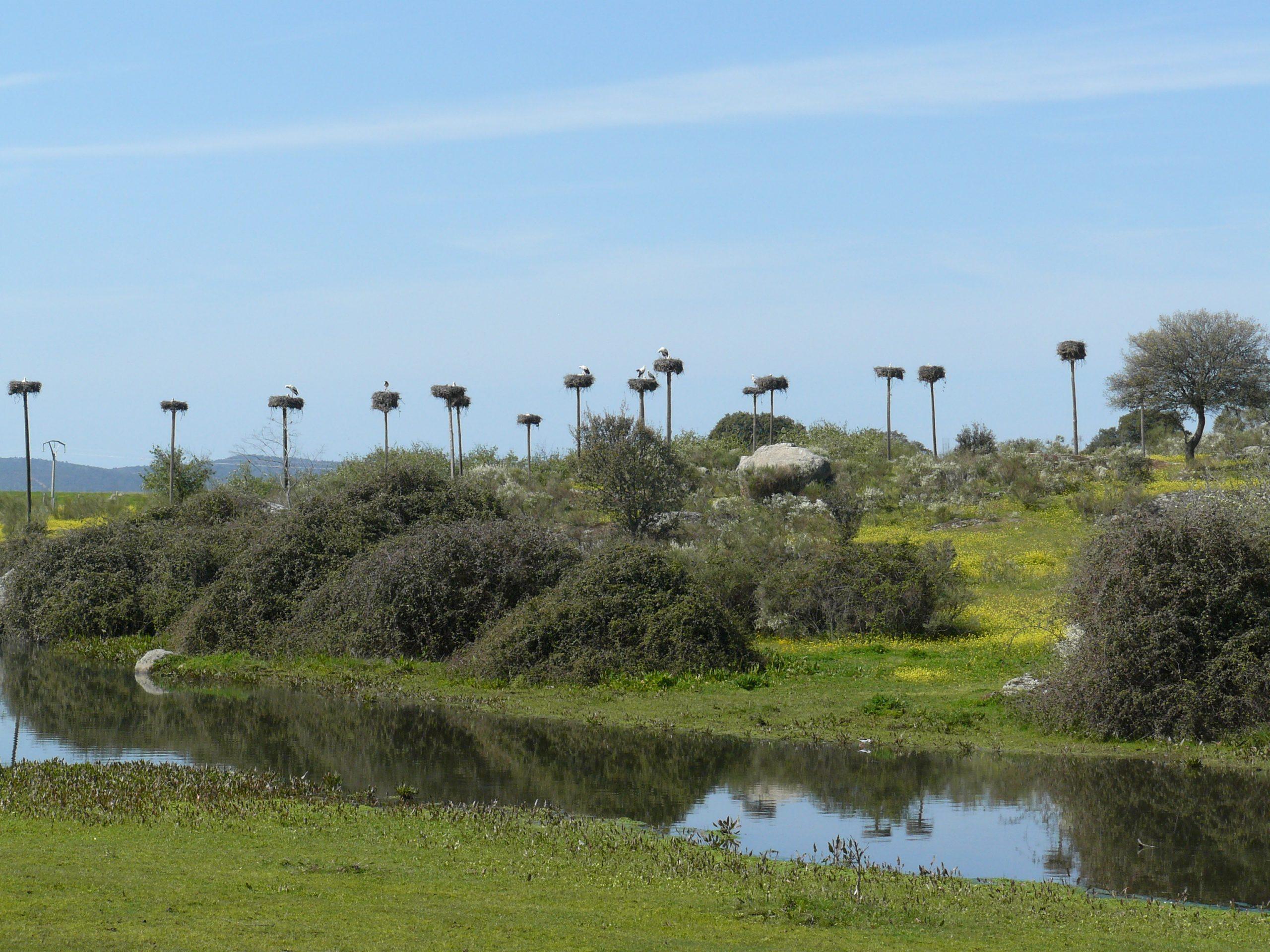 Ooievaarsnesten in natuurpark Los Barruecos