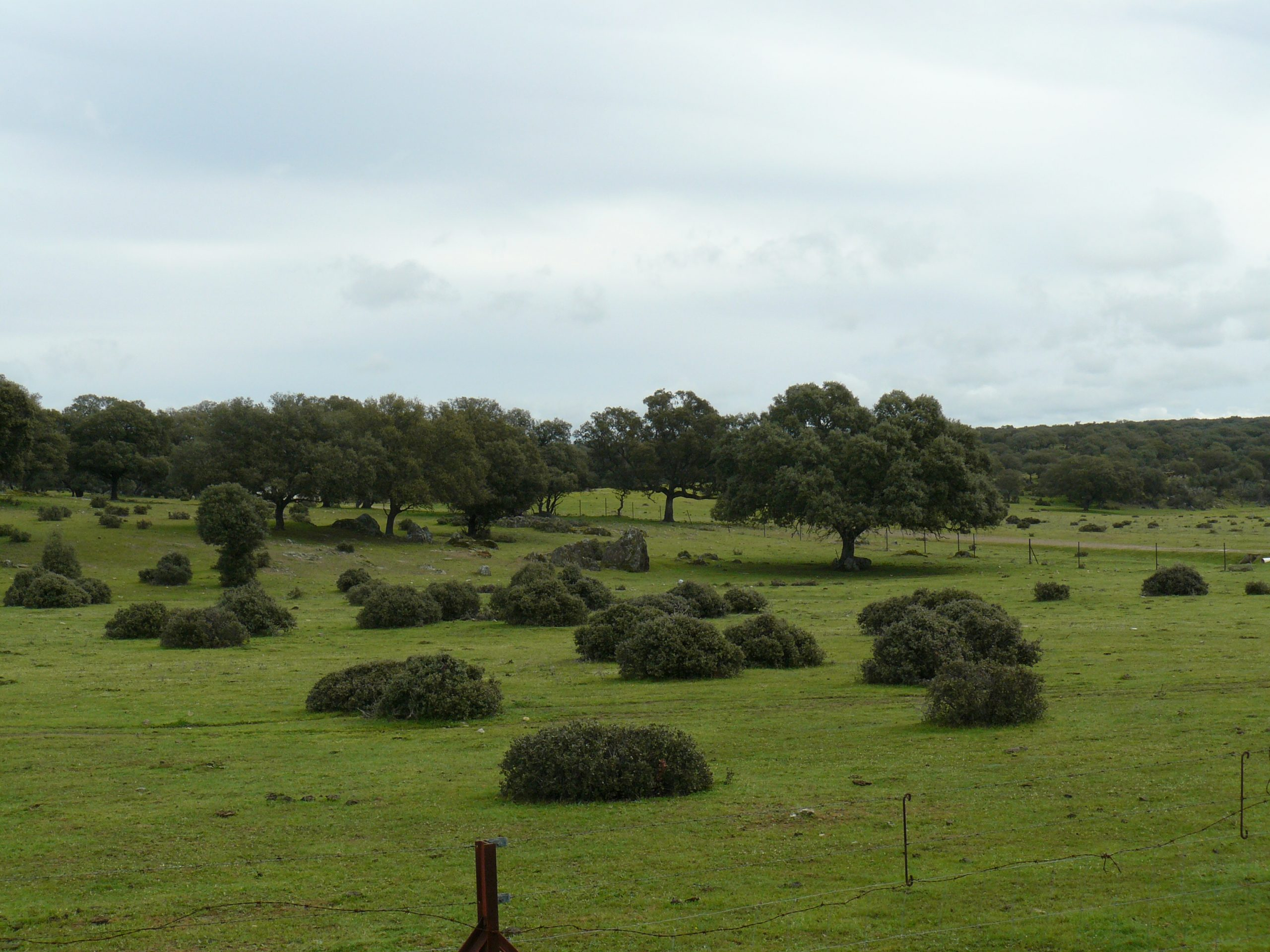Steppes van Extremadura