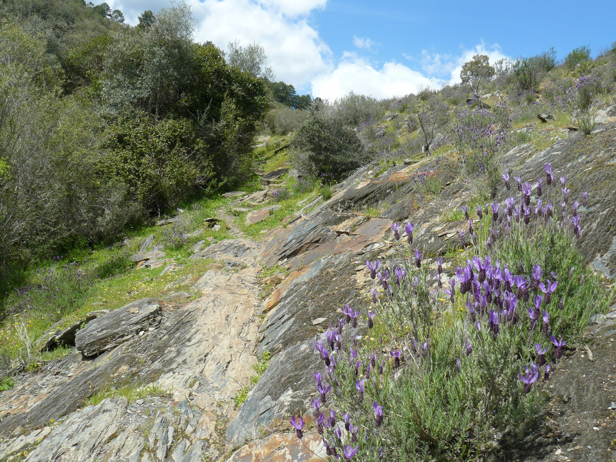 Wandelpad naar Cerro Gimio